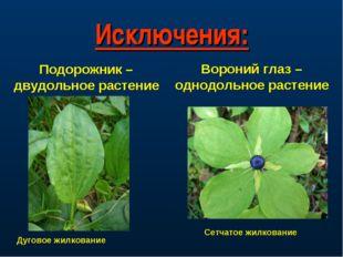 Исключения: Подорожник – двудольное растение Дуговое жилкование Вороний глаз