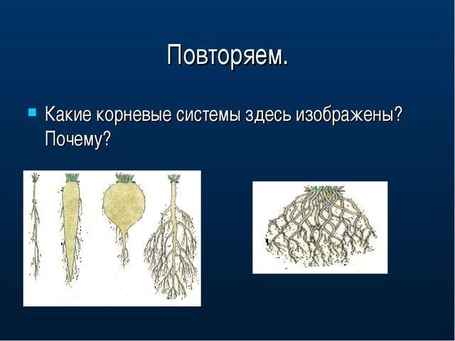 Повторяем. Какие корневые системы здесь изображены? Почему?