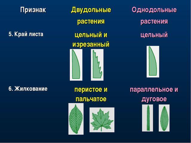 ПризнакДвудольные растенияОднодольные растения 5. Край листацельный и изре...