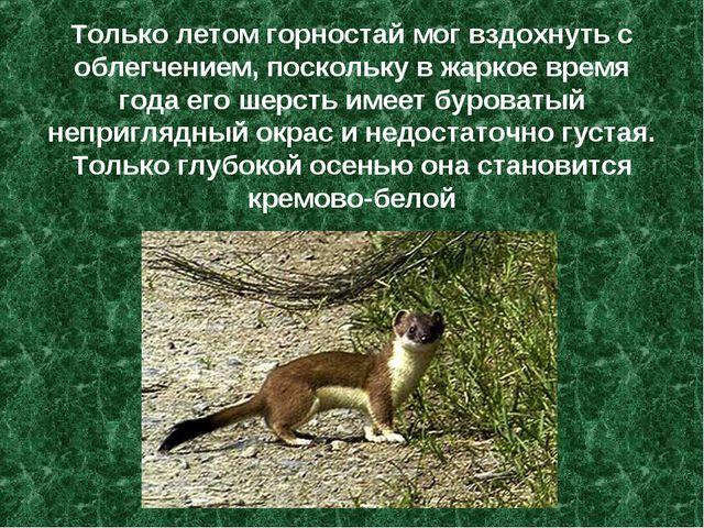 Только летом горностай мог вздохнуть с облегчением, поскольку в жаркое время...