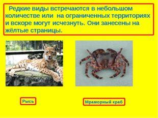 Неопределенные виды, про которые известно, что они могут принадлежать до кате