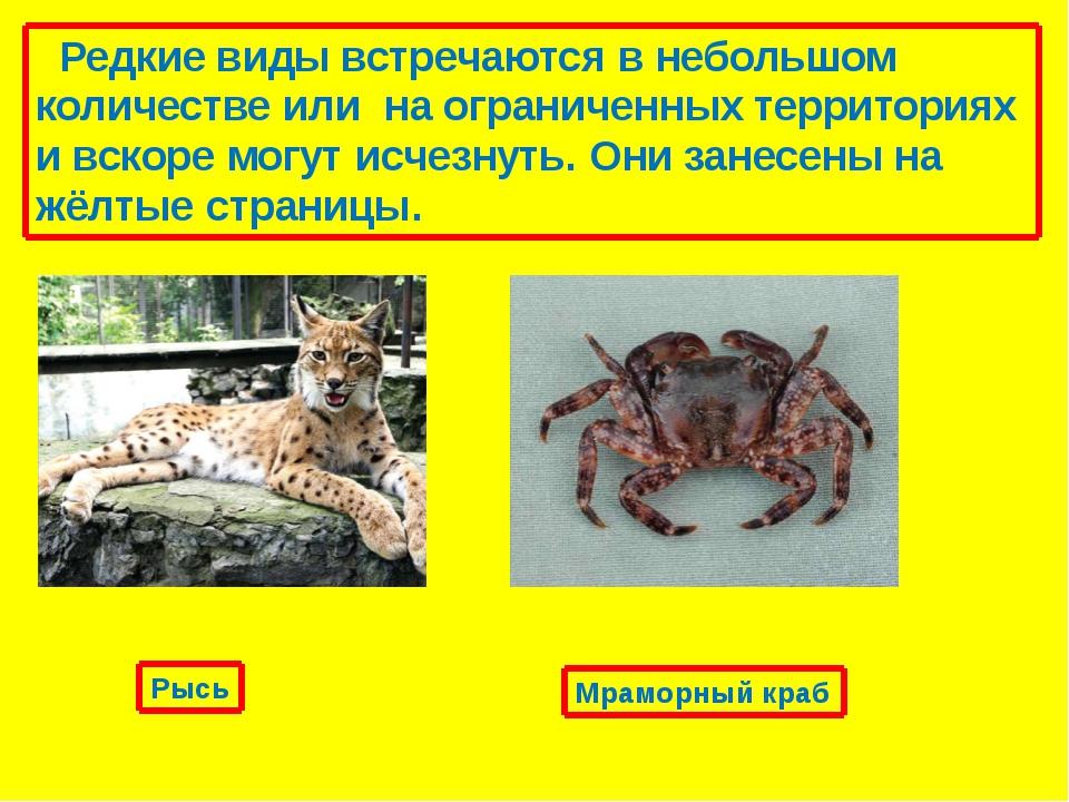 Неопределенные виды, про которые известно, что они могут принадлежать до кате...