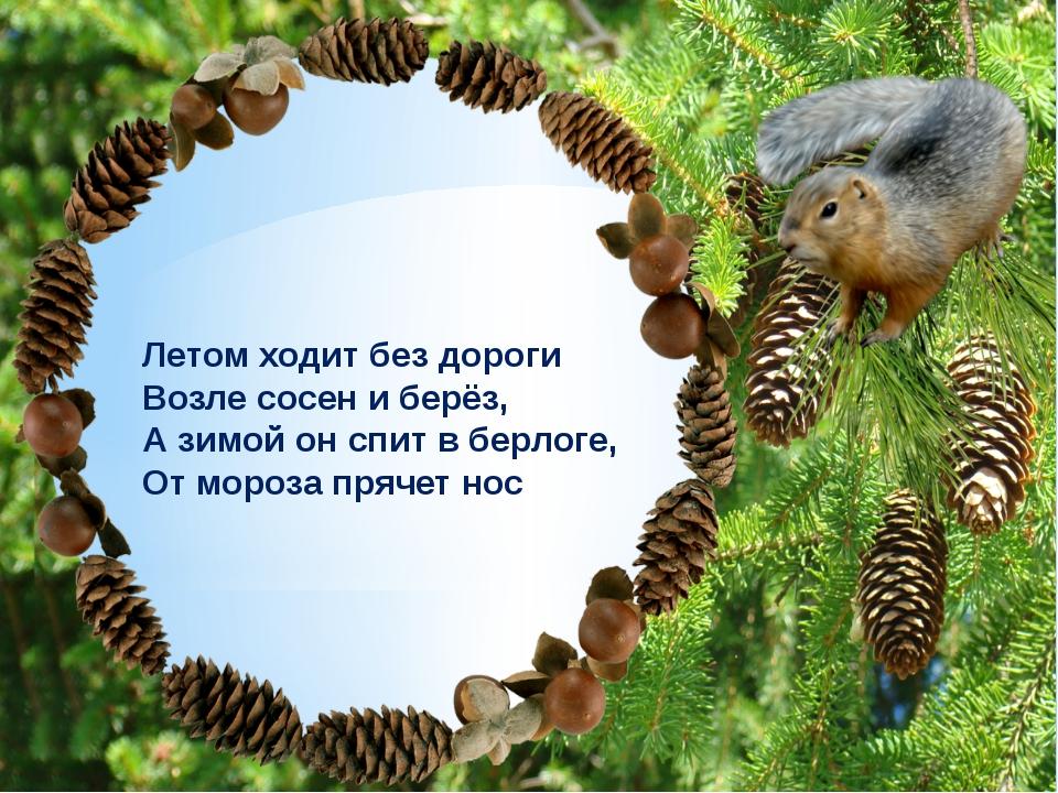 Не орёл и не синица А совсем другая птица Настоящая, не миф Птица-хищник, это...