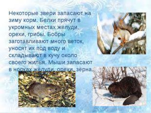 Некоторые звери запасают на зиму корм. Белки прячут в укромных местах жёлуди,