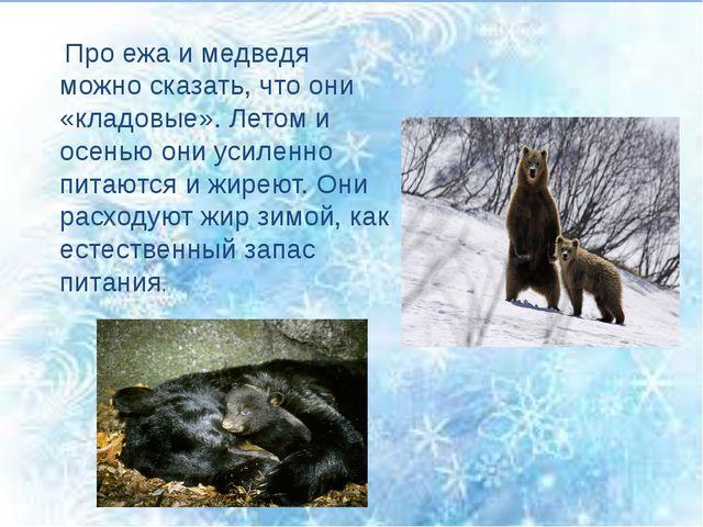 Про ежа и медведя можно сказать, что они «кладовые». Летом и осенью они усил...