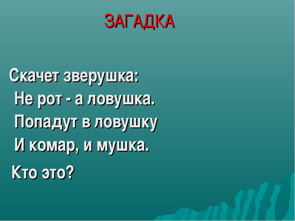 ЗАГАДКА Скачет зверушка: Не рот - а ловушка. Попадут в ловушку И комар, и муш...