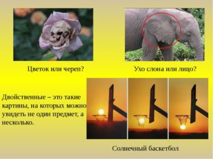 Цветок или череп? Ухо слона или лицо? Двойственные – это такие картины, на ко