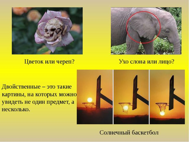 Цветок или череп? Ухо слона или лицо? Двойственные – это такие картины, на ко...