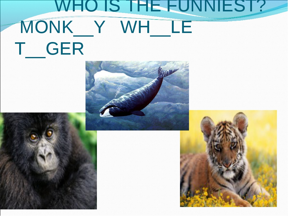 WHO IS THE FUNNIEST? MONK__Y WH__LE T__GER