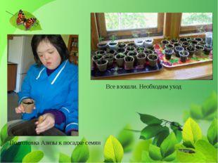 Подготовка Азизы к посадке семян Все взошли. Необходим уход
