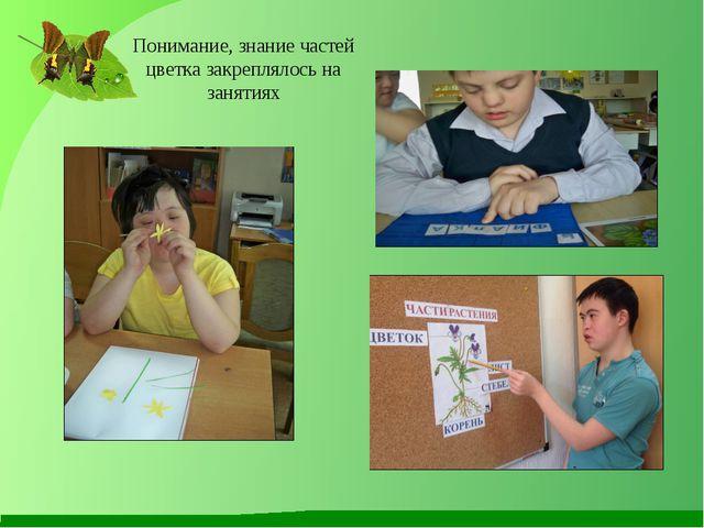 Понимание, знание частей цветка закреплялось на занятиях