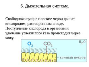 5. Дыхательная система Свободноживущие плоские черви дышат кислородом, раство