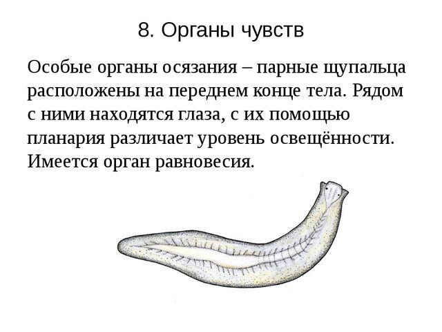 8. Органы чувств Особые органы осязания – парные щупальца расположены на пере...