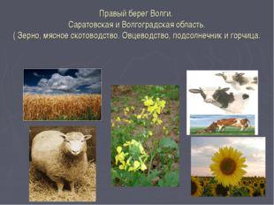 Правый берег Волги. Саратовская и Волгоградская область. ( Зерно, мясное скот
