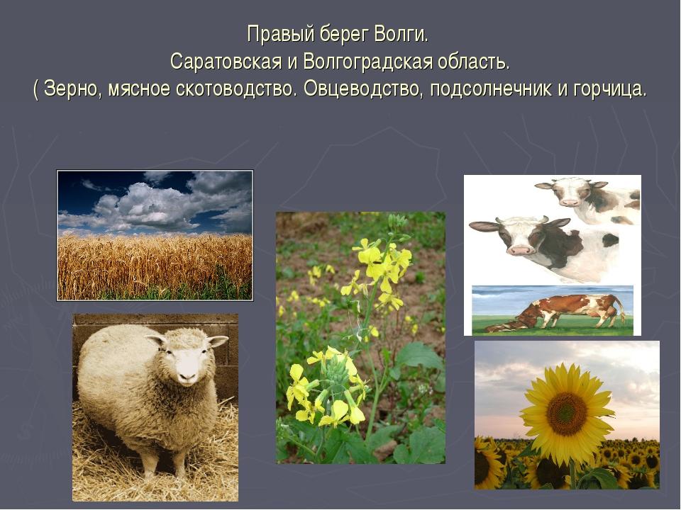 Правый берег Волги. Саратовская и Волгоградская область. ( Зерно, мясное скот...