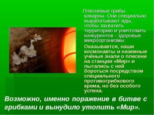 Плесневые грибы коварны. Они специально вырабатывают яды, чтобы захватить те