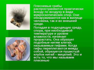 Плесневые грибы распространяются практически всюду по воздуху в виде микроск