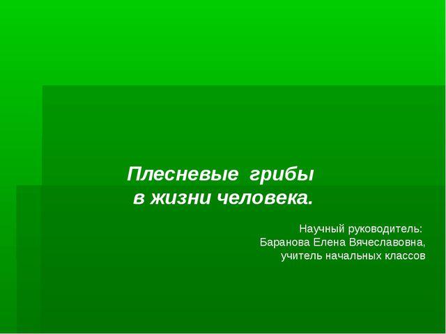 Плесневые грибы в жизни человека. Научный руководитель: Баранова Елена Вячесл...