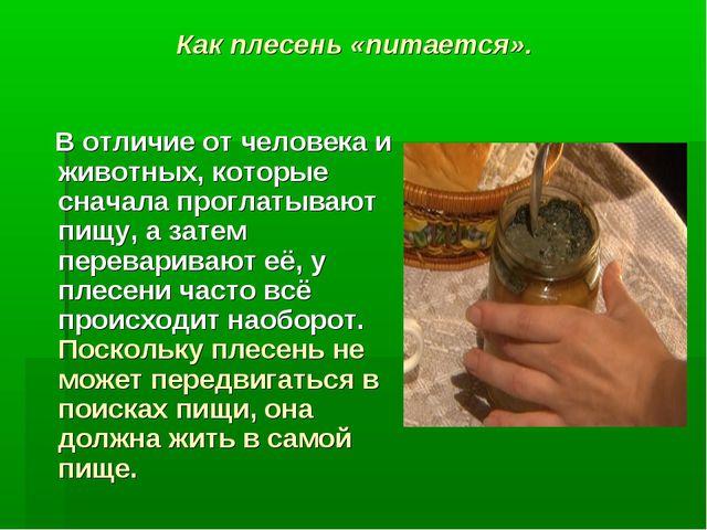 Как плесень «питается». В отличие от человека и животных, которые сначала про...
