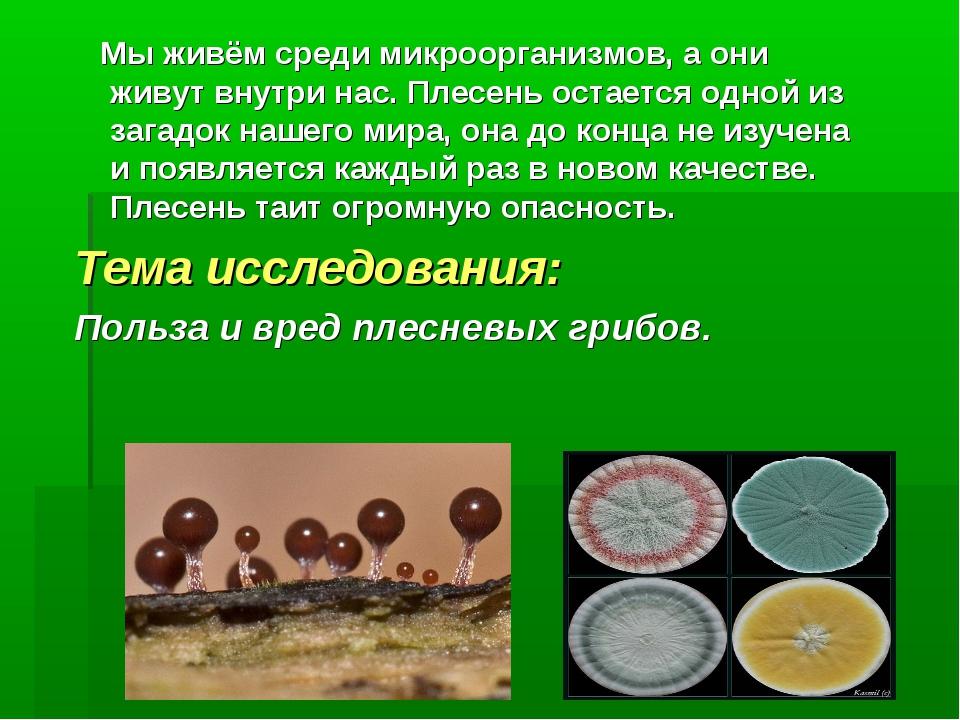 Мы живём среди микроорганизмов, а они живут внутри нас. Плесень остается одн...