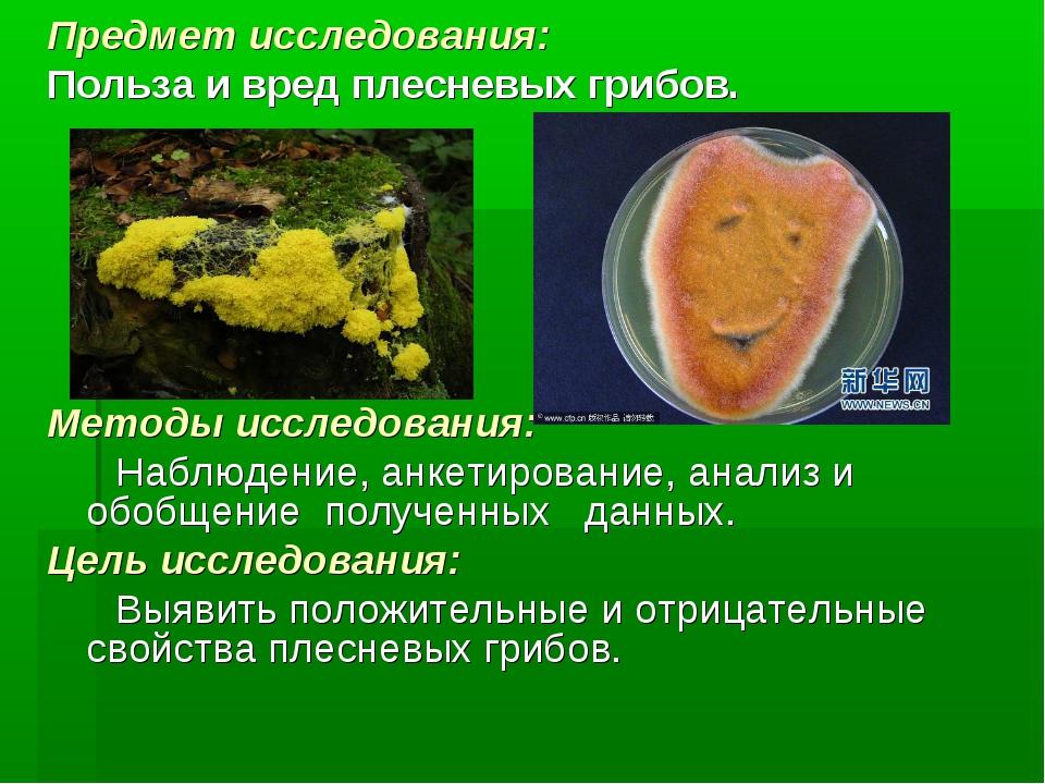 Предмет исследования: Польза и вред плесневых грибов. Методы исследования: На...