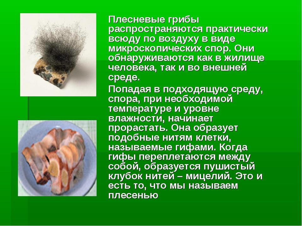 Плесневые грибы распространяются практически всюду по воздуху в виде микроск...