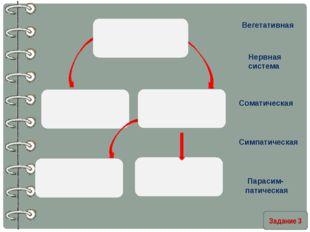 Задание 3 Вегетативная Нервная система Соматическая Симпатическая Парасим- п