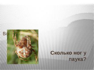 Сколько ног у паука? Вопрос № 30