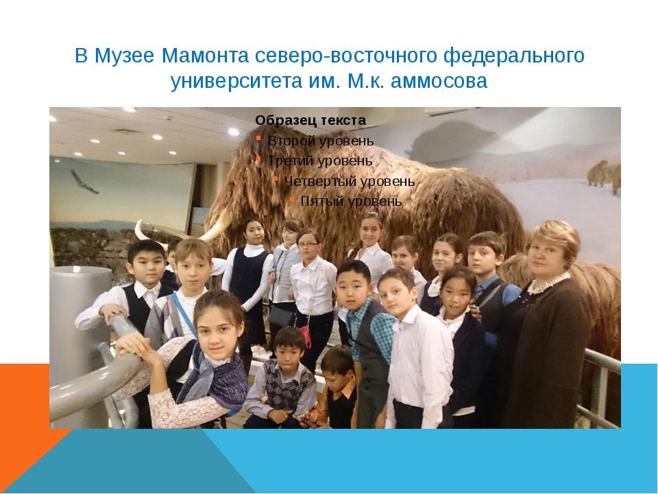 В Музее Мамонта северо-восточного федерального университета им. М.к. аммосова