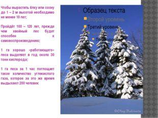 Чтобы вырастить ёлку или сосну до 1 – 2 м высотой необходимо не менее 10 лет;