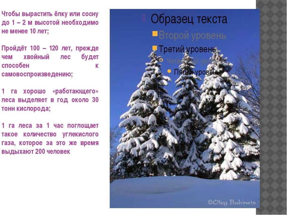 Чтобы вырастить ёлку или сосну до 1 – 2 м высотой необходимо не менее 10 лет;...