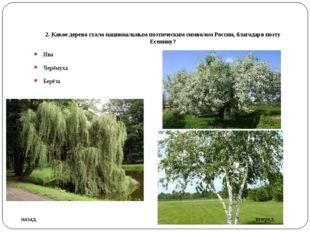 2. Какое дерево стало национальным поэтическим символом России, благодаря поэ