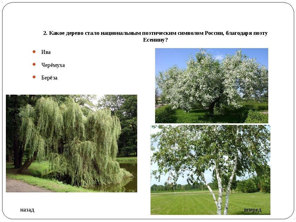 2. Какое дерево стало национальным поэтическим символом России, благодаря поэ...