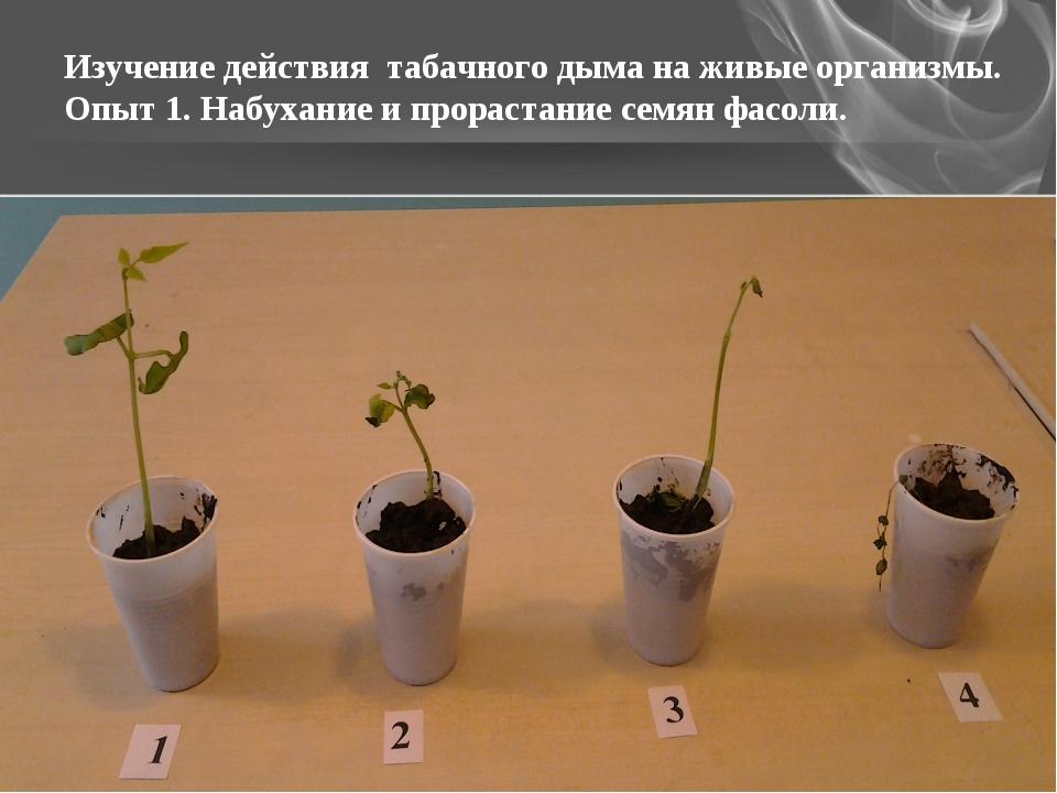 Изучение действия табачного дыма на живые организмы. Опыт 1. Набухание и прор...