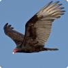 Как с помощью птиц обнаружить утечку газа?
