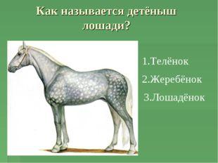 Как называется детёныш лошади? 1.Телёнок 2.Жеребёнок 3.Лошадёнок