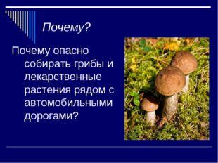 Почему? Почему опасно собирать грибы и лекарственные растения рядом с автомоб