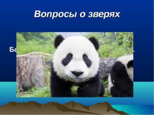 Вопросы о зверях Бамбуковый медведь называется …