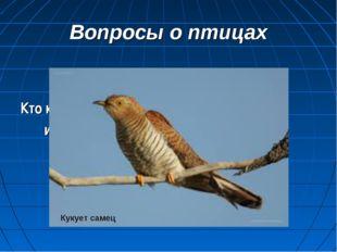 Вопросы о птицах Кто кукует у кукушек: самец или самка? Кукует самец