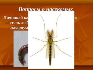 Вопросы о насекомых Личинкой какого насекомого является столь любимый рыболов