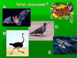 Что лишнее? A B C D E