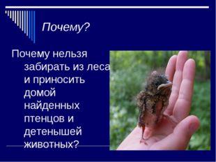 Почему? Почему нельзя забирать из леса и приносить домой найденных птенцов и