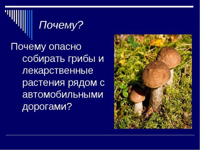 Почему? Почему опасно собирать грибы и лекарственные растения рядом с автомоб...