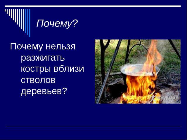 Почему? Почему нельзя разжигать костры вблизи стволов деревьев?