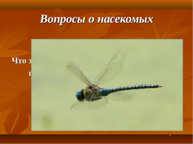 Вопросы о насекомых Что за коромысло, на котором нельзя принести воды?