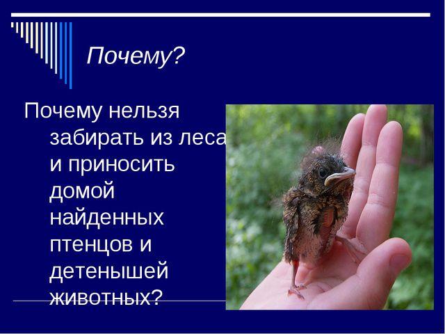 Почему? Почему нельзя забирать из леса и приносить домой найденных птенцов и...