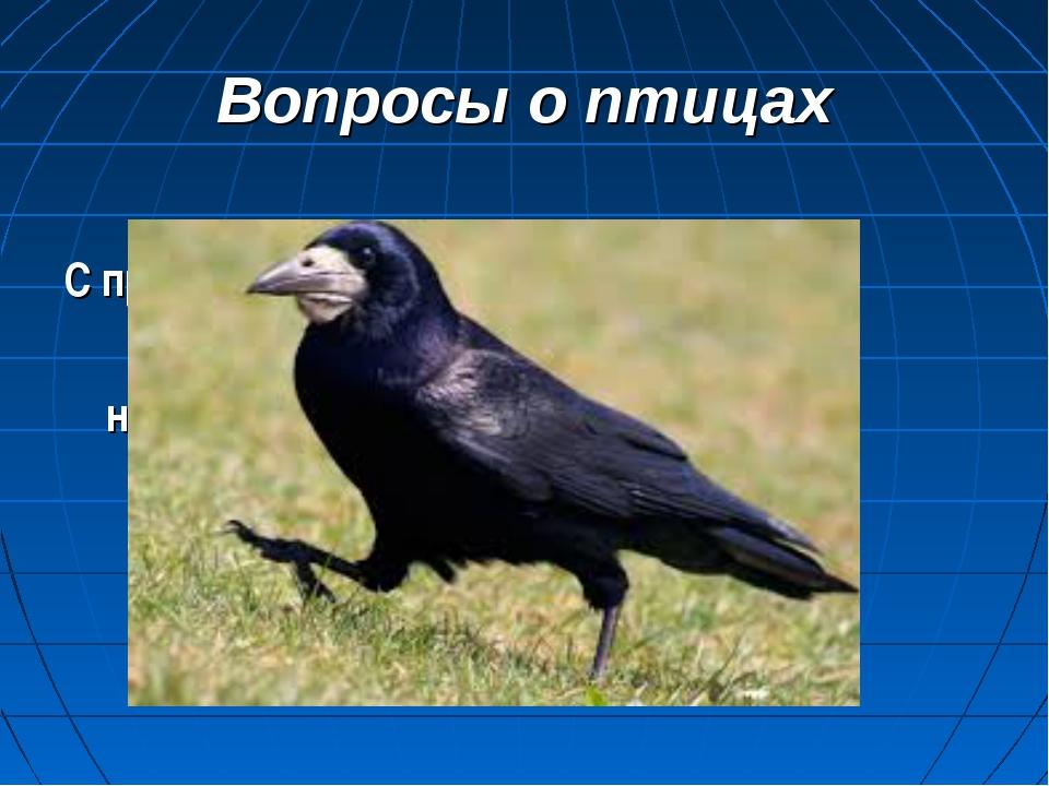 Вопросы о птицах С прилетом каких птиц мы начинаем отсчет весны?