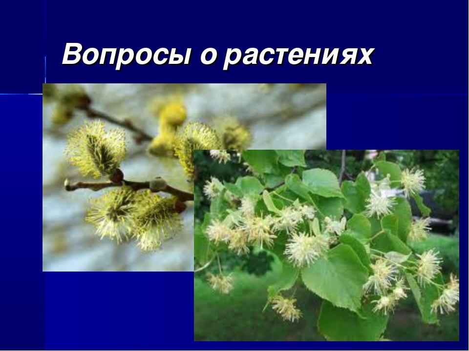Вопросы о растениях Какое дерево нашей местности зацветает самым первым, а ка...