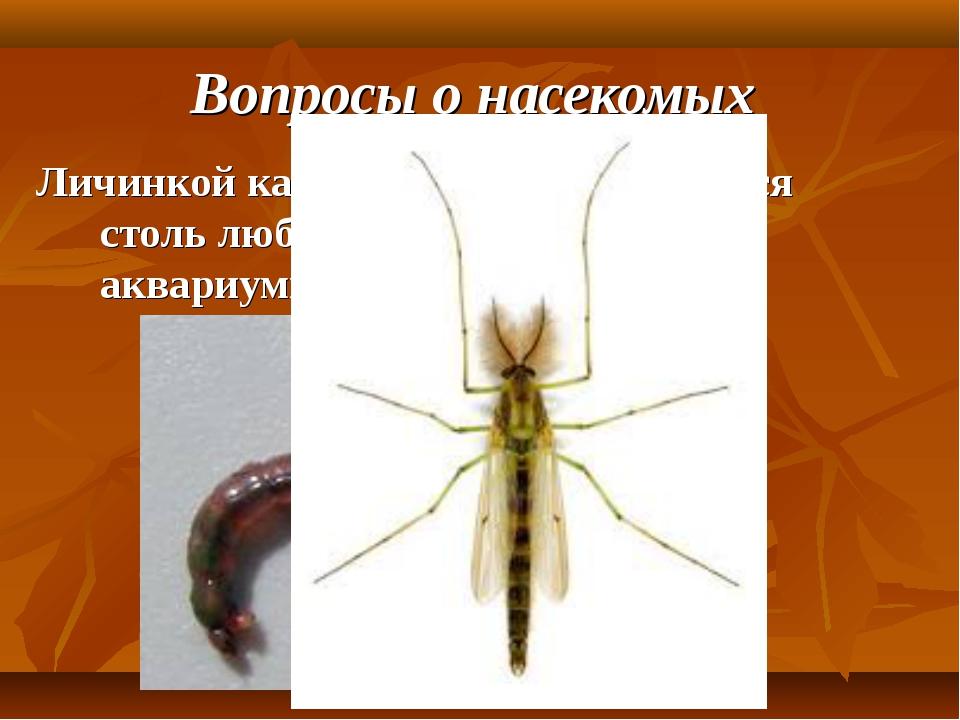 Вопросы о насекомых Личинкой какого насекомого является столь любимый рыболов...