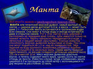 Вид МАНТА занесён в международную Красную Книгу МАНТА или гигантский морской